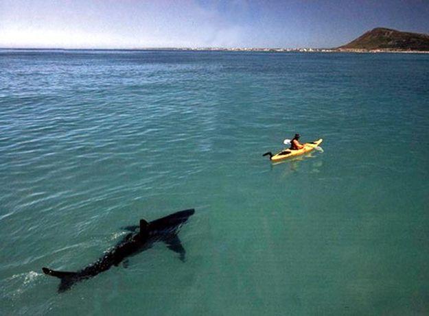 Акула откусила ногу и убила серфера